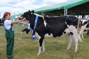Czempion w kategorii jałowice cielne rasy polskiej holsztyńsko – fryzyjskiej odmiany czarno-białej i czerwono-białej oraz superczempion wystawy wśród krów