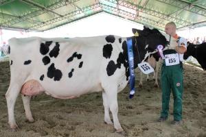 Czempion w kategorii krowy w III i dalszej laktacji rasy polskiej holsztyńsko – fryzyjskiej odmiany czarno-białej i czerwono-białej oraz superczempion wystawy wśród krów