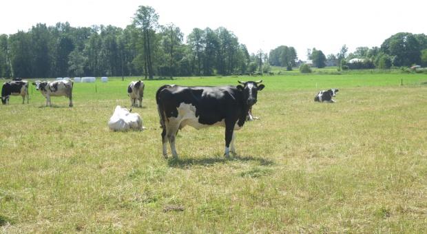 Ograniczanie produkcji mleka bez wsparcia krajowego?