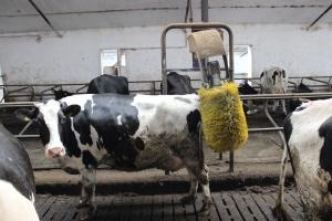 GDT: Stabilne ceny produktów mlecznych