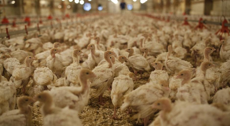 KRD podpisała porozumienie  z Chinami zwiększające eksport drobiu