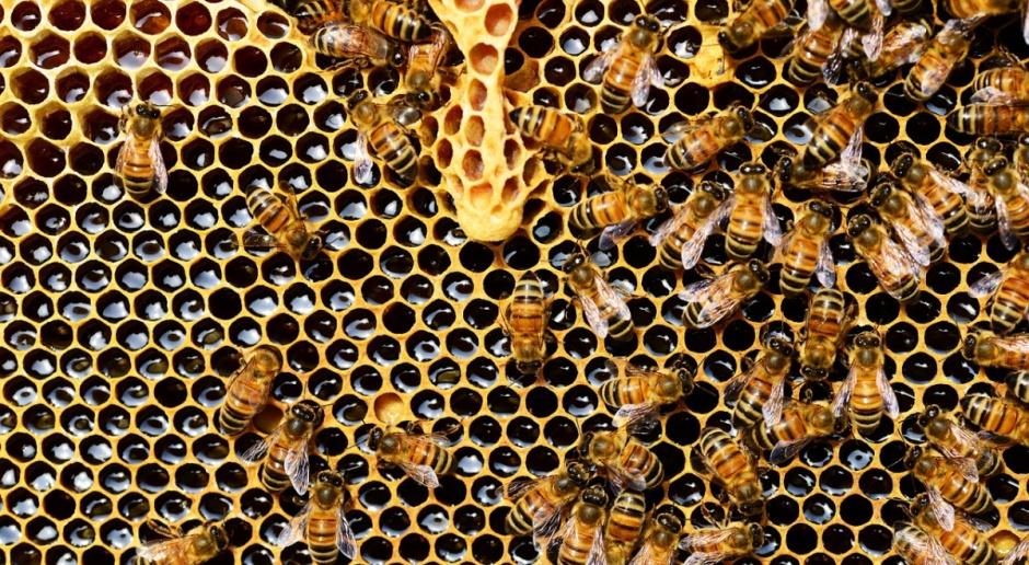Copa i Cogeca o znaczeniu pszczół