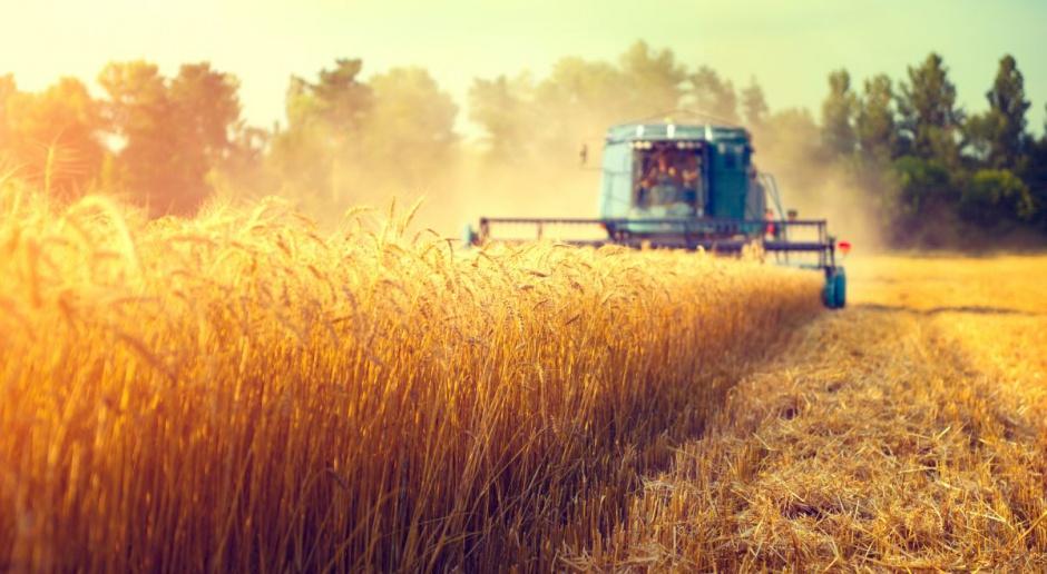 Producenci szacują zbiory zbóż na co najmniej 26 mln ton