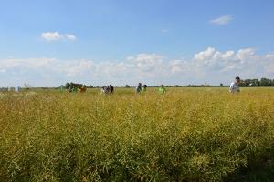 Doświadczenia polowe Bayera w Gaju Małym