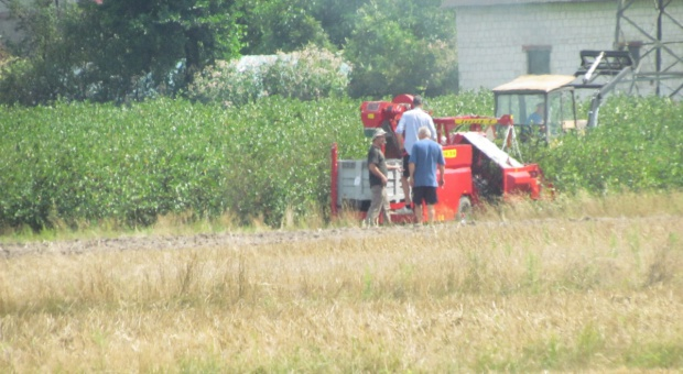 Minimalna stawka godzinowa dotyczy też rolnictwa