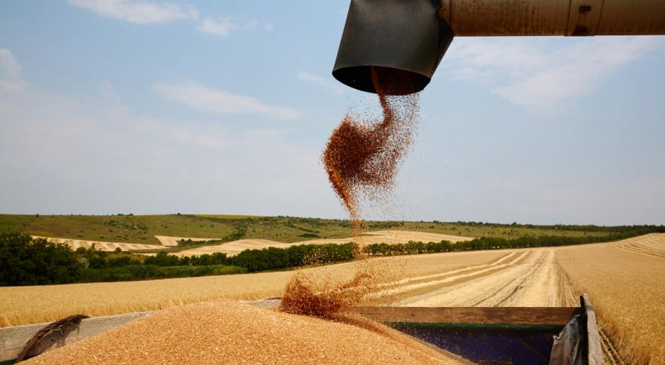 KOWR: Ceny zbóż w tym sezonie będą wyższe niż w poprzednim