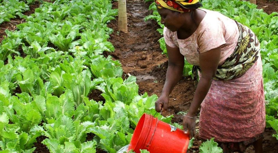 Polska Fundacja dla Afryki: Zmiany klimatu wymuszają zmianę upraw