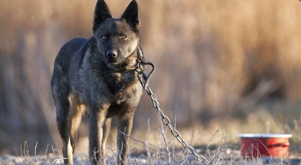 MS proponuje wyższe kary za znęcanie się nad zwierzętami