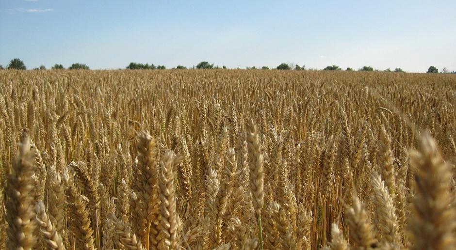 Ceny zbóż na stałym poziomie