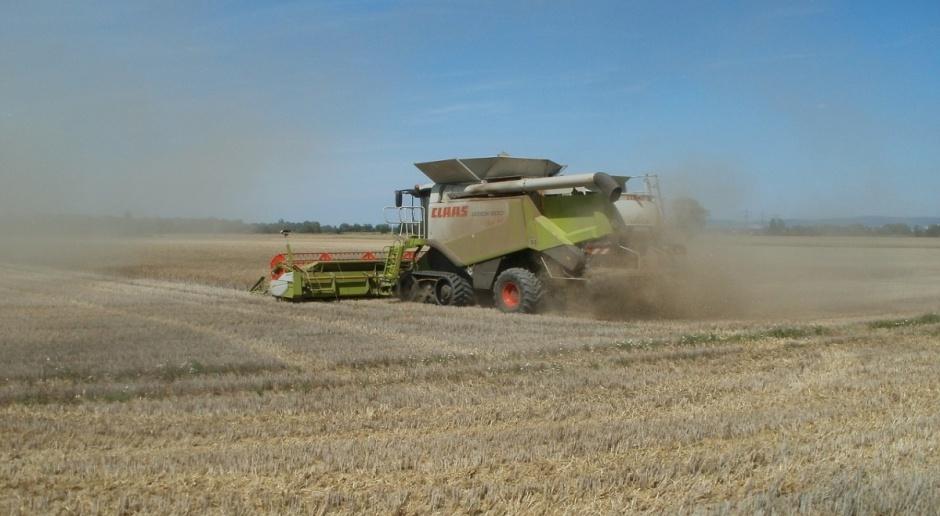 Niemcy: Oczekiwane przeciętne zbiory zbóż