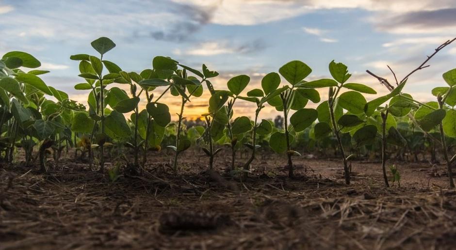 Uprawy ekologiczne będą lepiej kontrolowane?