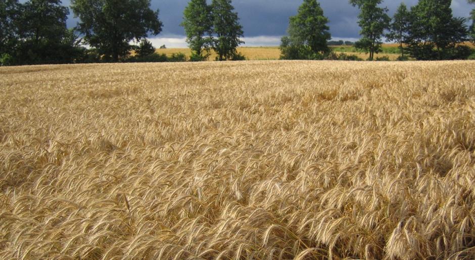 Wykaz środków ochrony roślin w integrowanej produkcji roślin
