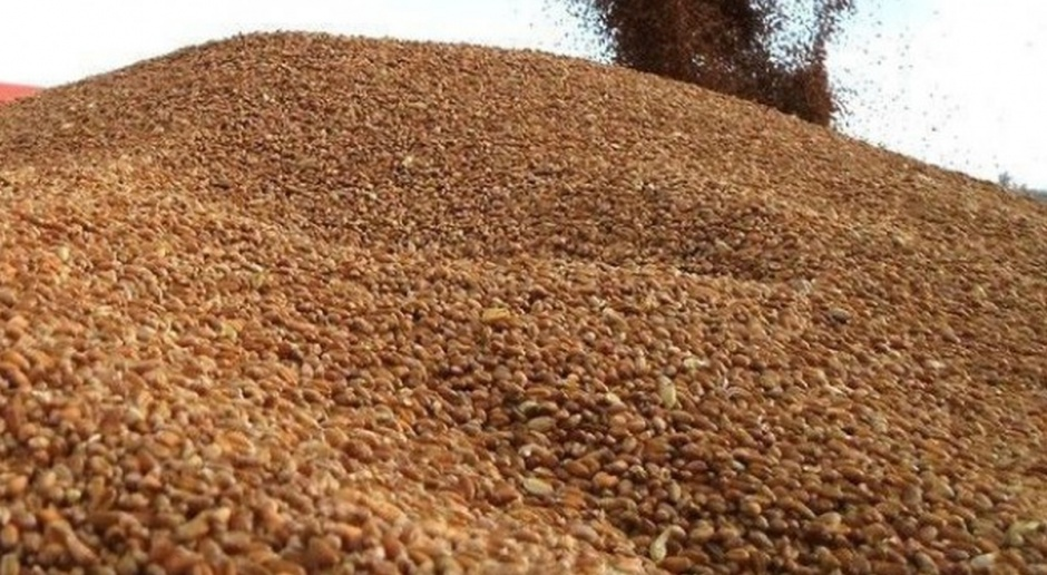 UE: Eksport zbóż prawie rekordowy