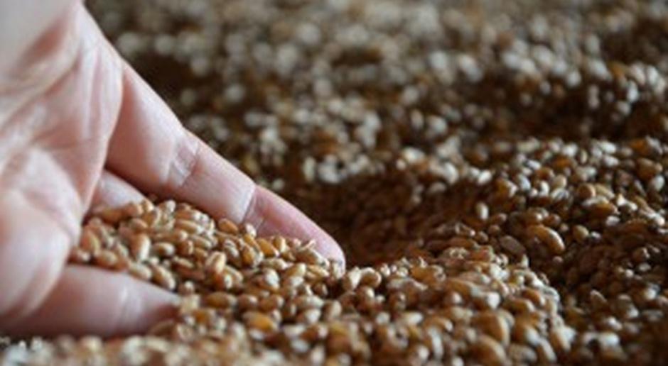 KE oczekuje stabilnych cen ziarna zbóż
