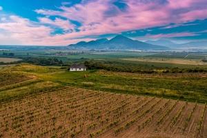 Rośnie polski rynek wina