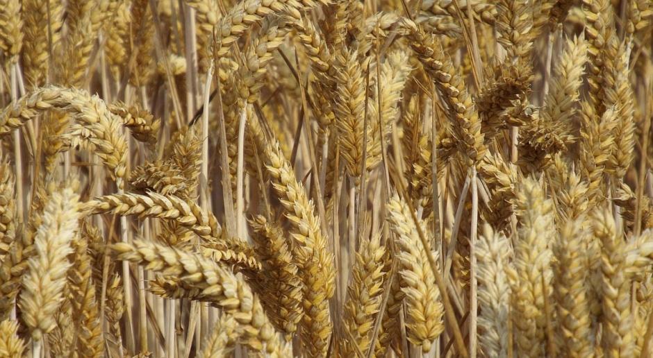 Ceny zbóż niezmienne