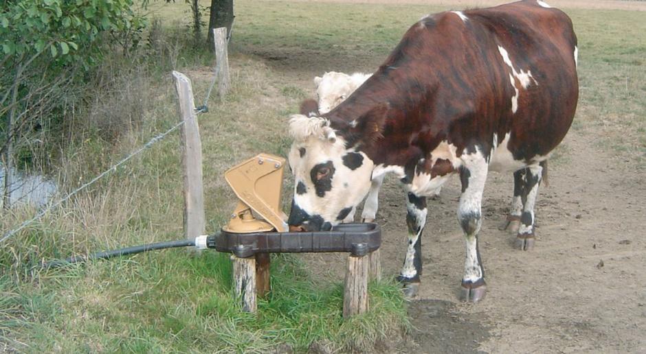 Poidło pastwiskowe z pompą napędzaną przez pijące bydło