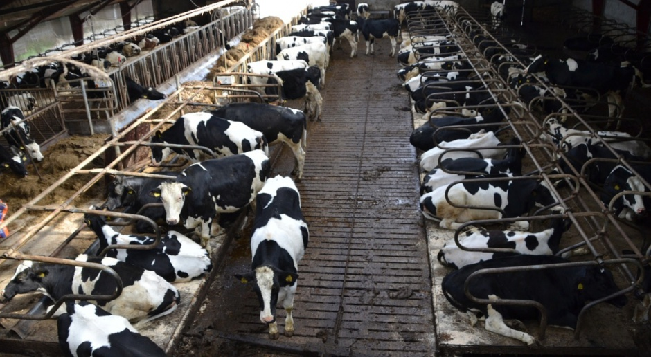 Niemcy: Duże straty producentów mleka