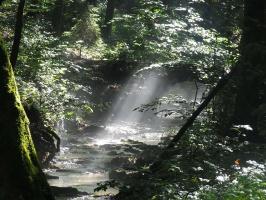 Europejski Tydzień Lasów