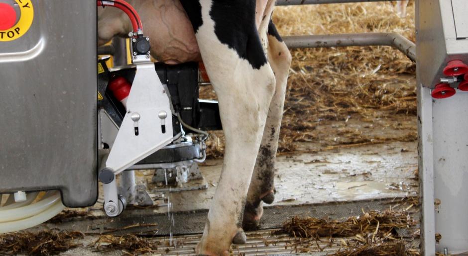 Cena mleka w kraju średnio poniżej 1 zł