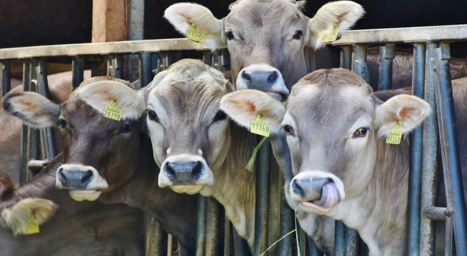 Kanada zwiększa wsparcie ceny masła i OMP