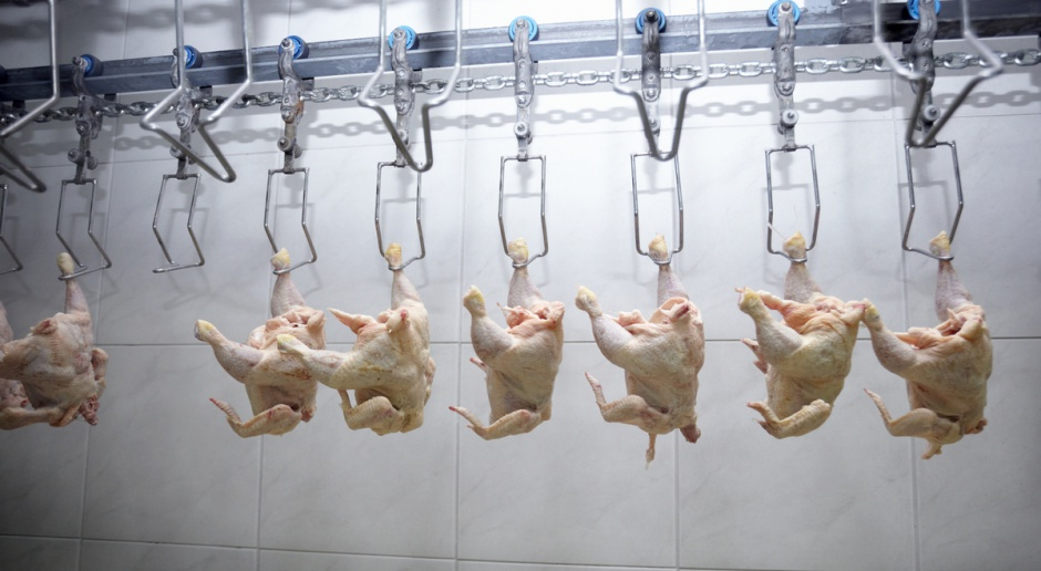 ARR: Ceny wieprzowiny wyższe niż przed rokiem, wołowiny zbliżone, drobiu niższe