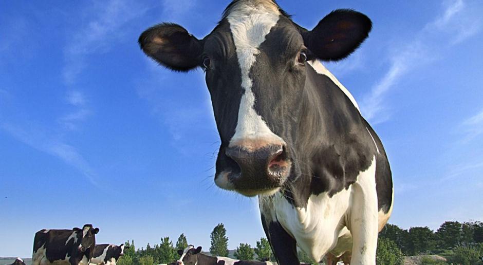 FrieslandCampina: Cena gwarantowana dla mleka surowego kolejny miesiąc bez zmian