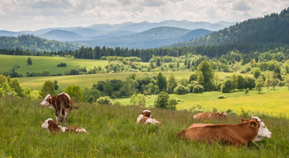 Bieszczady: Rozpoczęły się leśne sianokosy