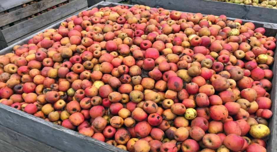 Niemcy: Więcej jabłek przemysłowych