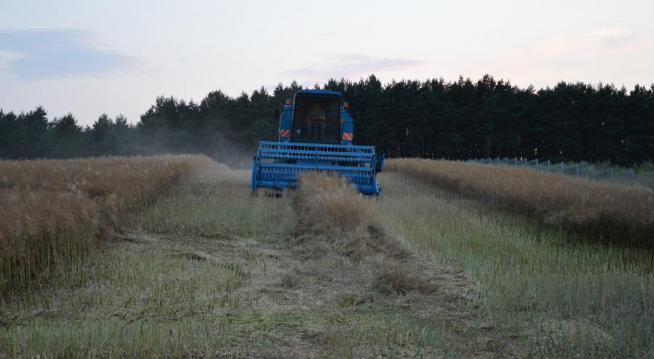 Rolnicy niezadowoleni ze zbiorów rzepaku