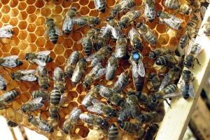 Pszczelarze potrzebni od zaraz