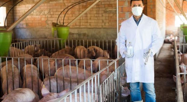 Niemcy redukują stosowanie antybiotyków u zwierząt