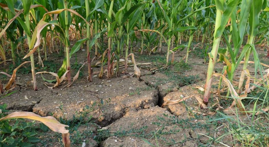 Rumunia cierpi na niedobór wody