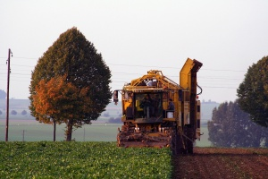 Rosja: Większa produkcja cukru