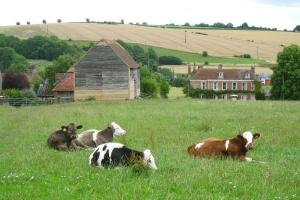 Spada liczba gospodarstw rodzinnych w Wielkiej Brytanii