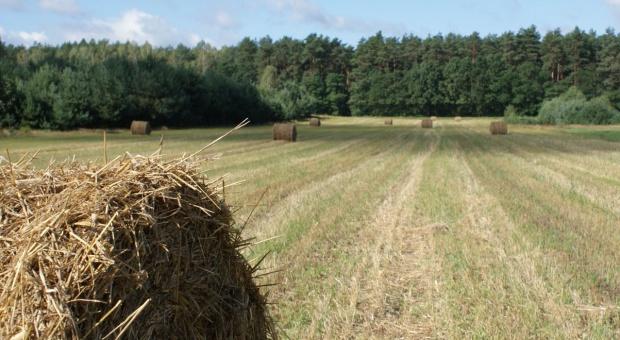 Do końca lipca ANR wydzierżawiła 52,4 tys. ha ziemi