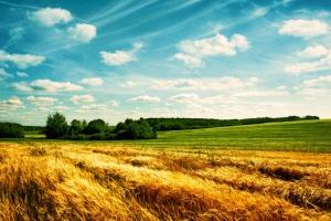 MRiRW: Projekt dot. nowej agencji rolnej przekazany do konsultacji