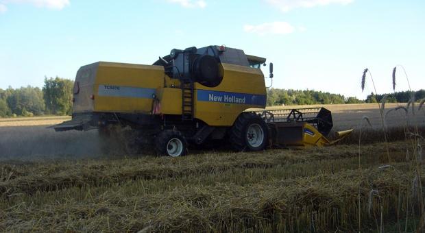 Słabe plony zbóż na Kujawach