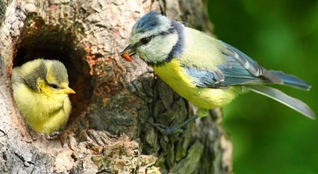 Stare polskie gospodarstwa to oazy ptasiej bioróżnorodności