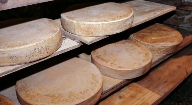 USDA: Rząd zamierza skupować ser od producentów