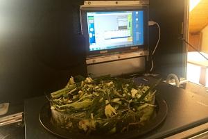 Następnie wszystkie pocięte kawałki miesza się, po czym odważa się odpowiednią porcję świeżej zielonki, suszy, a wyschniętą biomasę waży. Wynik odczytuje się w procentach. Fot; Limagrain