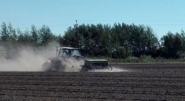 Kujawy – rolnicy ciągle sieją rzepak