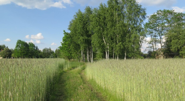 Ważne zmiany dla młodych rolników w rozporządzeniu o ARiMR