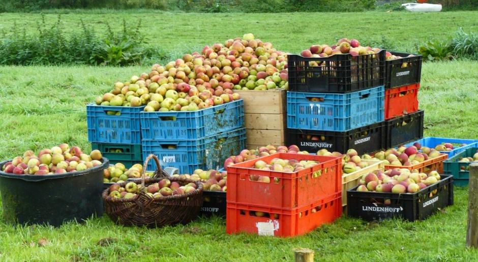 Niskie ceny skupu jabłek. Sadownicy zapowiedzieli protest