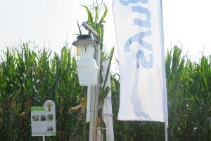 Monitoring agrofagów