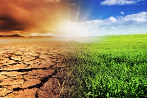 Ubiegły rok należy zaliczyć do ekstremalnie ciepłych