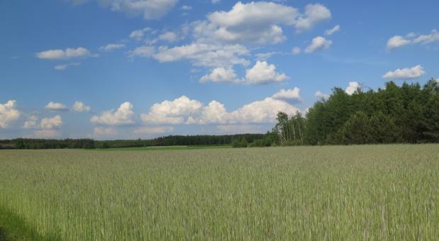 Sprzedaż ziemi w Polsce uregulowana wzorcowo