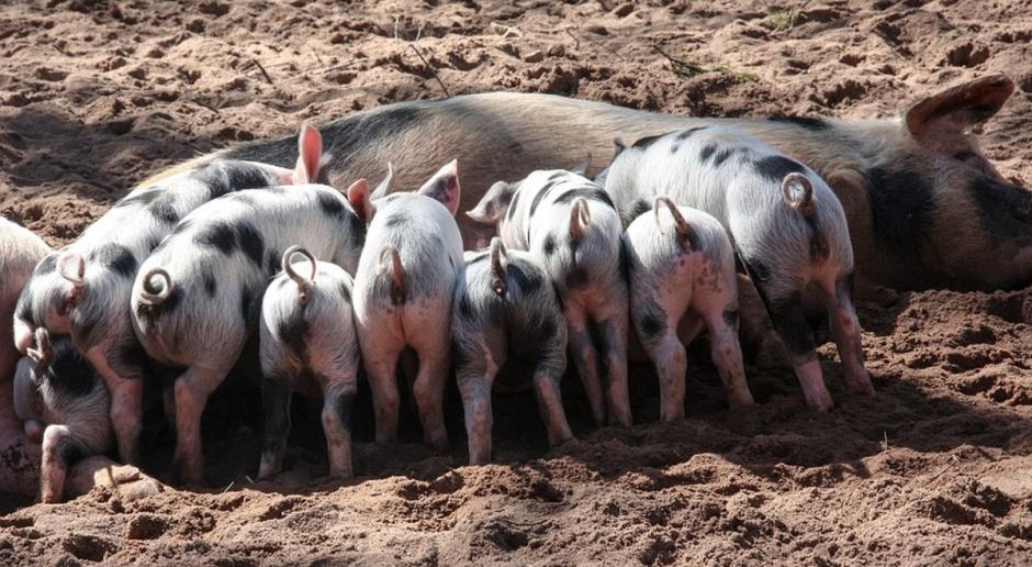 Bioasekuracja na terenie całego kraju?