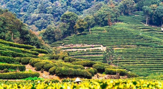 Chiny chcą zmodernizować rolnictwo i przemysł żywnościowy