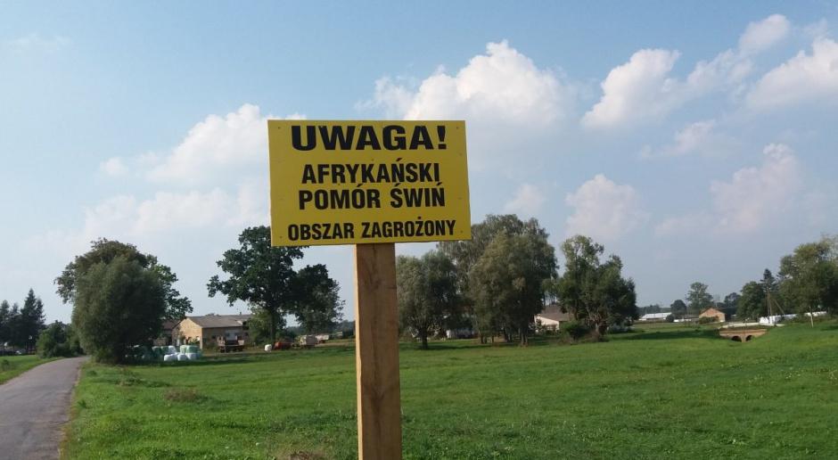 Lubelskie: 21. ognisko ASF u świń w Polsce